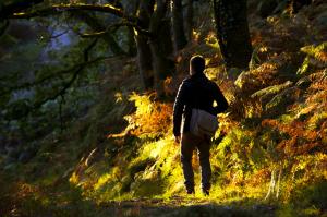 Walker in Dewerstone Wood, in the Upper Plym Valley, Dartmoor National Park, Devon.