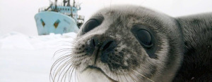 smaller_jesse_s_seal_and_ship