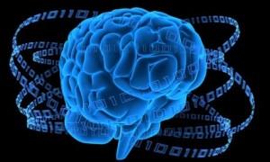 The-brain-007