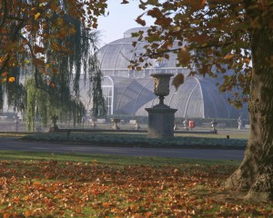 The Palm House in Autumn. Photo:RBG Kew.