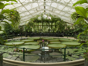 The Waterlily House. Photo:RBG Kew