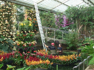 Inside the Princess of Wales Conservatory 12 March 2015