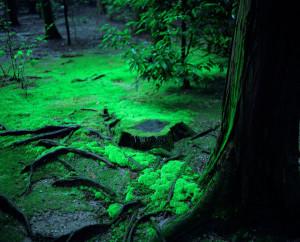 Mossy Ground, Nara, Japan, 2000, WW
