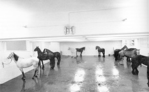 The 12 horses of Kounellis