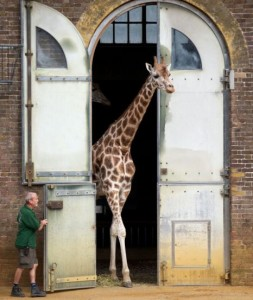The Giraffe House