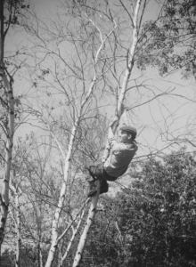 13-jonas-in-the-trees