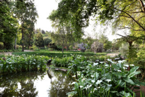 VIEW OF THE MEADOW FROM THE TIGER'S EYE CASCADE AND BOG GARDEN, GARDEN OF ST CHRISTOPHER, Hyde Park Design Debby Tenquist, 2013. Photograph Elsa Young PUBLISHED Feb 2014 issue Sa House & Garden Conde Nast Magazine , Copyright Garden of St Christopher