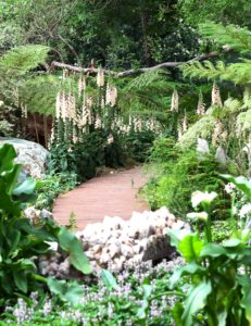 Forest of Foxgloves in the Gem Walk & Stumpery, Garden of St Christopher, Hyde Park Design Debby Tenquist Photograph Elsa Young PUBLISHED Feb 2014 issue SA House & Garden Conde Nast Magazine . Copyright Garden of St Christopher